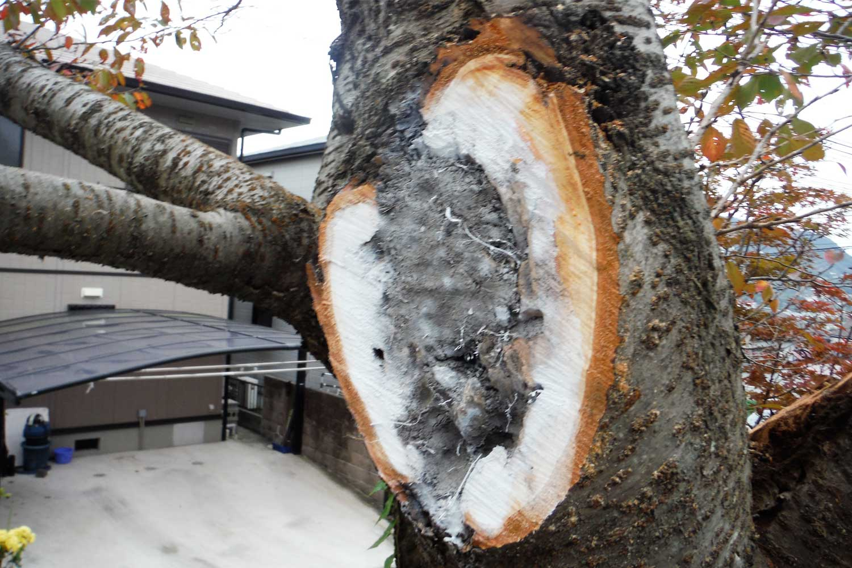 腐敗した枝を切断