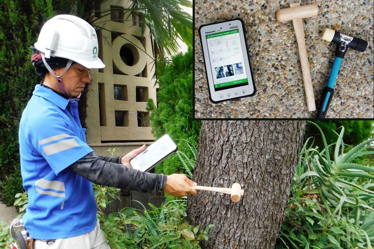 樹木の腐敗状況を調査
