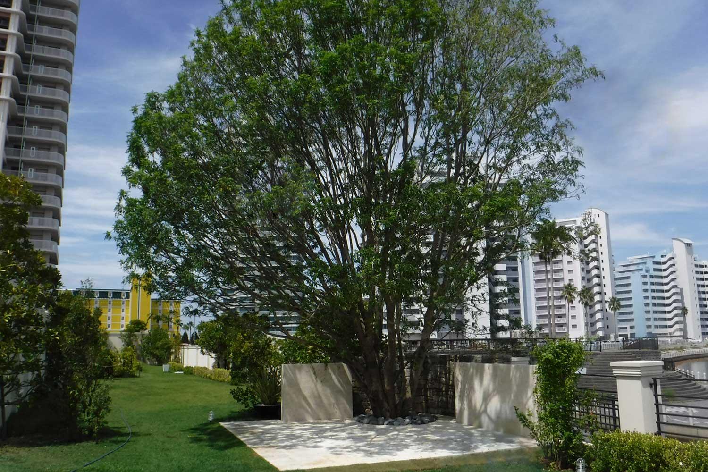 case-bayside-bigtree-14