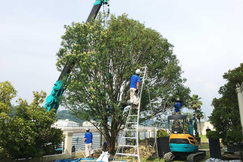 case-bayside-bigtree-4