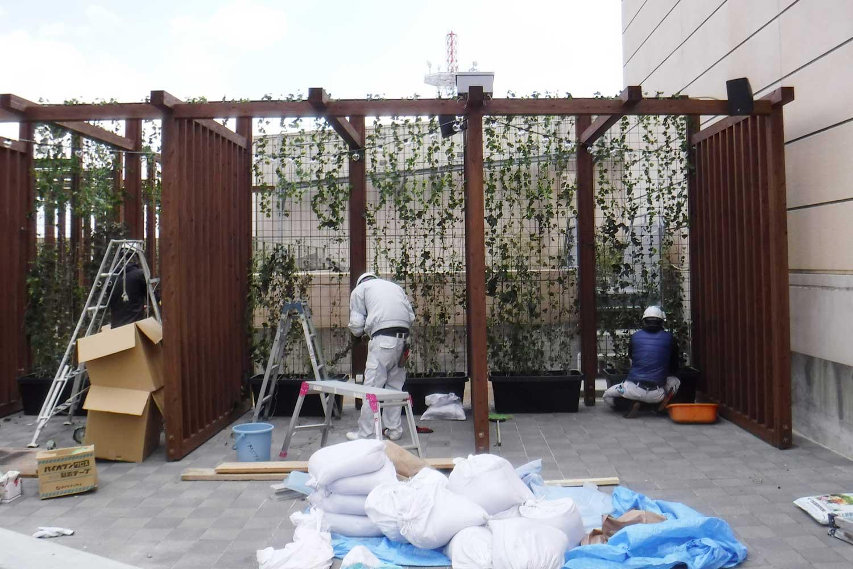 2. ウッドルーフ塗装後、アイアンフェンスを設置し、緑のカーテンを敷設します。ヘデラやジャスミン、カズラ等の花が楽しめます。ツル性植物の植栽、誘因作業に取り掛かっているところです。